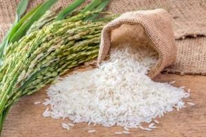 Pomiar wilgotności ryżu