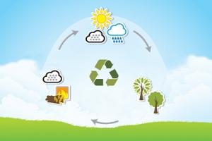 Czy biomasa jest odnawialnym źródłem energii?