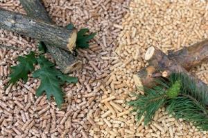 Jaki pellet wybrać – iglasty czy liściasty?