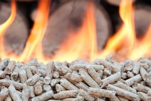 Biomasa – wady i zalety. To musisz o tym źródle energii wiedzieć
